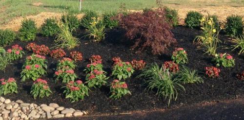 shrub1